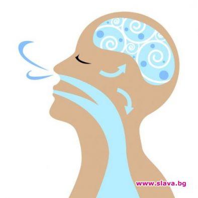 Дишането влияе върху вземането на решения