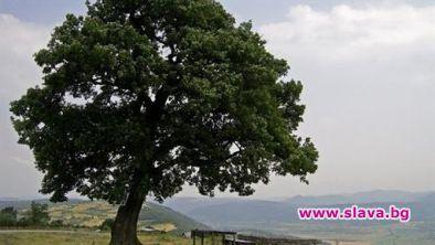 Установиха кои дървета пречистват най-добре въздуха...