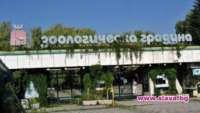В София отварят зоопарка, библиотеката, художествена...