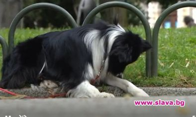Загубеното куче се прибра у дома след 10 дни в...