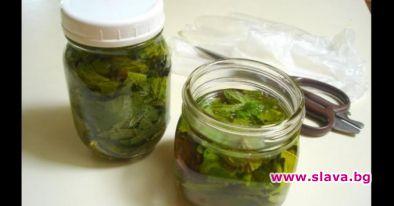 2 лъжи мед от коприва: Лекува мигрена, чисти кръвта и...