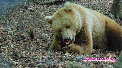 Нов обитател в Парка за танцуващи мечки