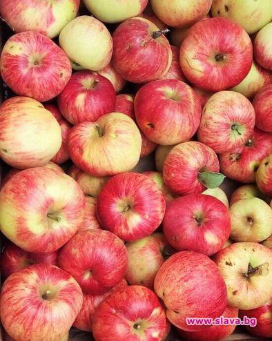 Шарените ябълки са най-полезни, зелените са...