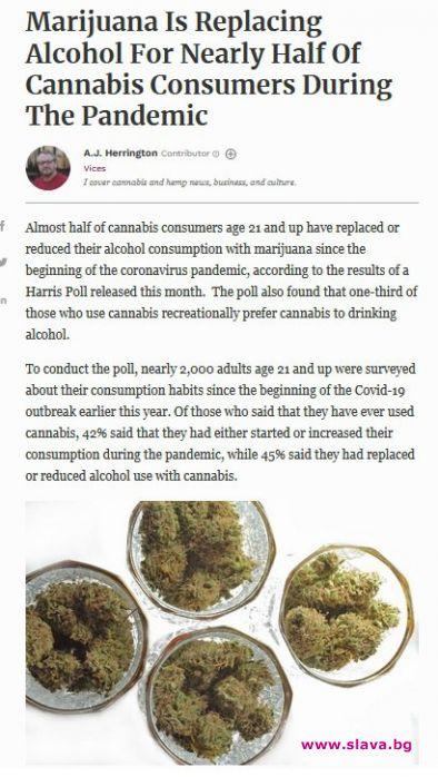 Любителите на канабиса смениха  алкохола с марихуана