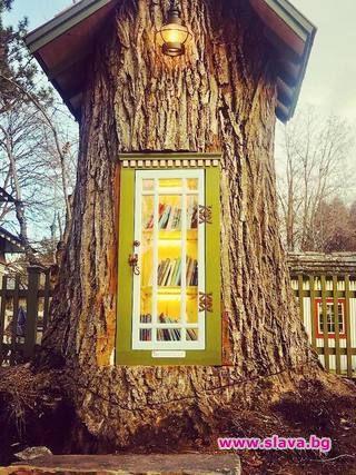 Снимка: Жена превърна старо дърво в библиотека