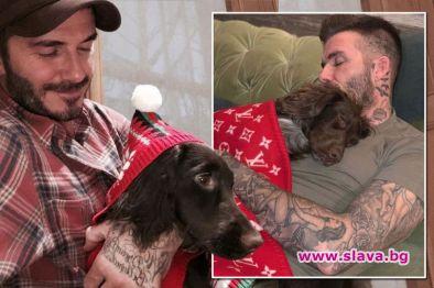 Снимка: Бекъм разгневи феновете, зави кучето си с одеало за 5 хил. паунда
