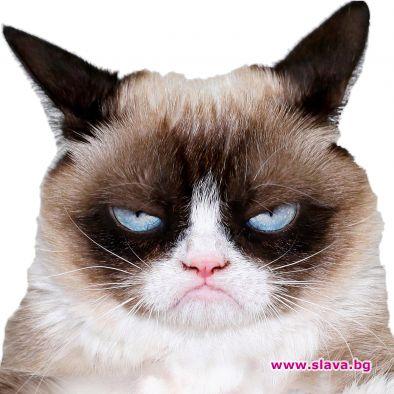 Милиони фенове на меметата скърбят за Grumpy Cat – животинката