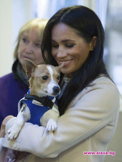 Меган Маркъл планира да осиновят някое изоставено куче от приют
