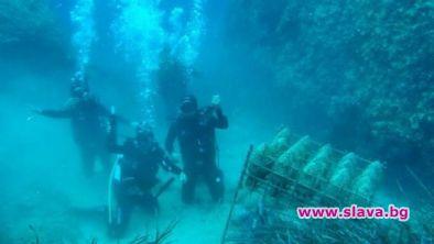 Снимка: Започна първият Международен салон по подводна фотография