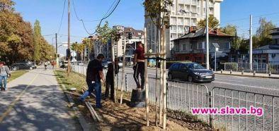 Започна озеленяването край транспортния възел до новата метростанция Красно село