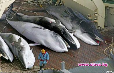 Прословутият японски китолов кораб Нишин Мару се върна на пристанището.