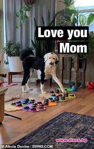 "Куче се научи да ""говори"" с помощта на звукова дъска."