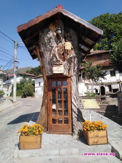 Старата топола е един от символите на Сопот. Гигантското дърво