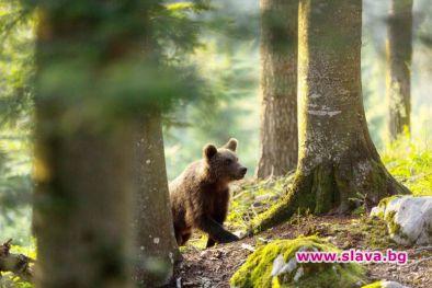 """Новият документален филм по Viasat Nature """"Завръщането на мечките"""" е"""