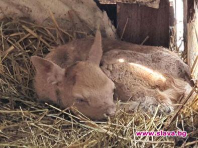 Зоопарк Бургас се радва на нови три бебета -бели еленчета