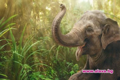 Гледката на слон, който тършува в кухнята, не е кой