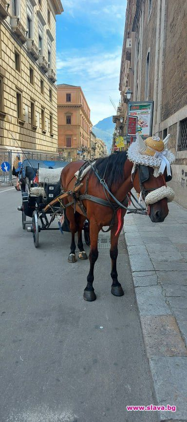 Конете в столицата на Сицилия – Палермо, носят шапки. Мъжките